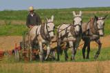 Team of Horses.jpg