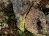 Grönt gulmjöl - Chrysothrix chlorina