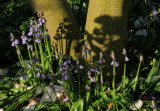 There  will  be  bluebells , and  shadows  of  bluebells .