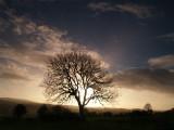 A stark tree