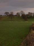 Hadrian's Wall,course of,near Walton.