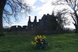Spring beauty at Caerlaverock