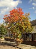 Autumn on the streets.
