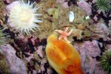 Sea Peach arrangement