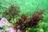Algae display