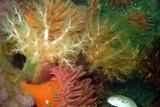 Sea Cucumbers & Anemone