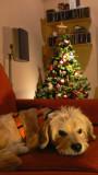 navidades perras