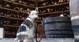 perro atado al barril