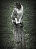 encima de un  tronco