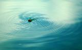 Drowning Hornet
