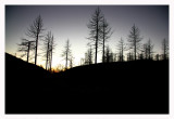 Scorched Trees At Sunset