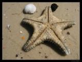 Starfish, Isla de la Juventud