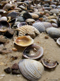 Shells, Isla de la Juventud