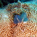 Blue xmas-tree worms
