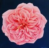 Paintings by Sue Twyman