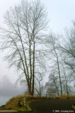 D2x2006-12-06_093.jpg