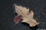 D70-2006-12-15_028.jpg