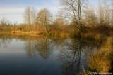Central Pond - Alton Baker Park