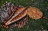 D70-2007-01-06_024.jpg