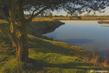 Morning Scene in Golden Garden Park