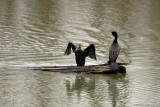 The Birds of Delta Ponds