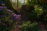 Azalea at Island Park