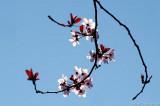D70-2007-03-17_035.jpg