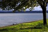 Fern Ridge Lake scene