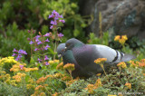 Pigeons and flowers