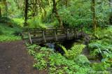 Bridge on the trail to Soda Creek Falls