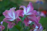 D200-2007-07-02_087.jpg