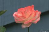 D200-2007-07-16_005.jpg