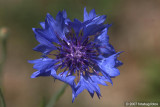 D200-2007-07-19_060.jpg