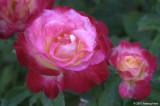D70-2007-08-15_034.jpg