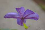 D50-2007-09-03_039.jpg