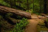 Blazing a trail - Trail to Upper Trestle Falls