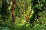 Forest Wonderland - Alton Baker Park