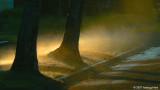 Misty glow