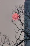 The sun, birds, tree and building in the dusk of Mid-Autumn Festival