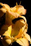 06-07 R Flowers 09.JPG