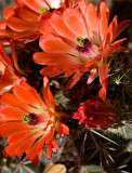 07-05 Cacti 01.JPG