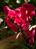 07-05 Mainau orchids 09.JPG
