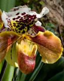 07-05 Mainau orchids 12.JPG