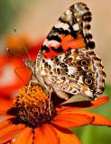07-09 Butterfly 01.JPG