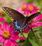 07-09 Butterfly 06.JPG