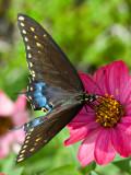 07-09 Butterfly 08.JPG
