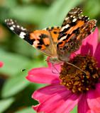 07-09 Butterfly 09.JPG
