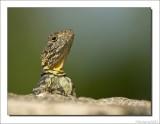 Reptielen    -    Reptiles