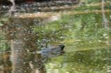 Waterfowl00002.jpg