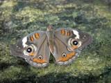 Butterfly00001.jpg
